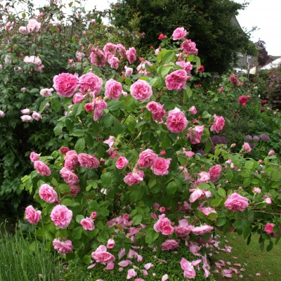 13 Open Gardens 12th June 2016