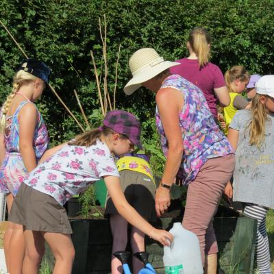 Brownies allotment July 2018 10