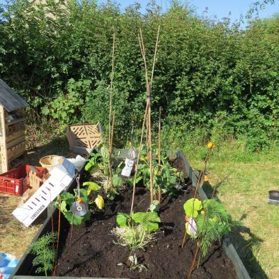 Brownies Allotment July 2018 17