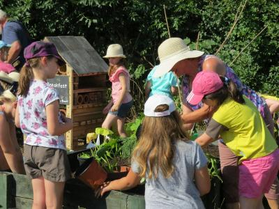 Brownies allotment July 2018 5