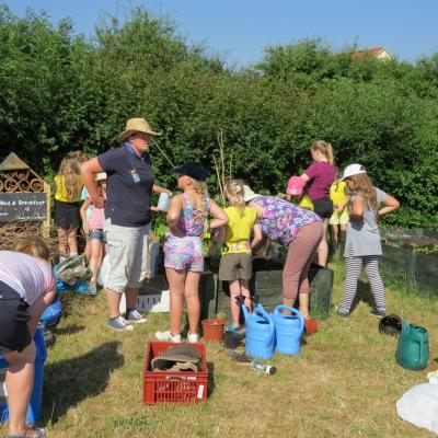 Brownies allotment July 2018 7