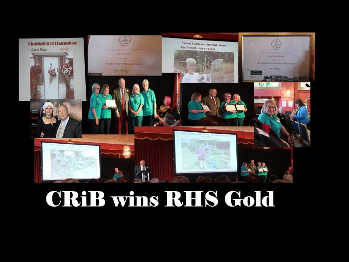 CRiB SWinBloom Awards 2019