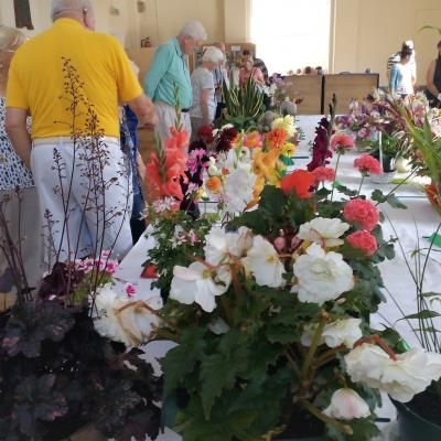 Flower Show Aug 2017 35