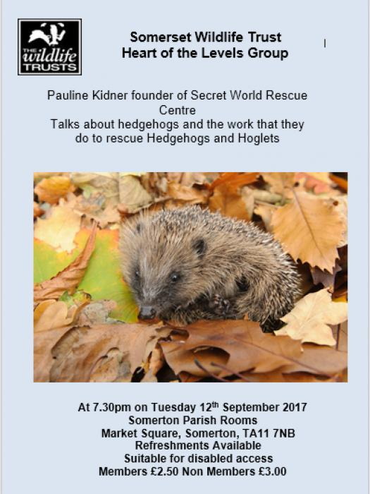 Getting to Know Hedgehogs