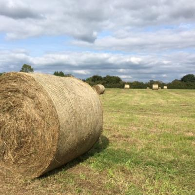 Haymaking Eastfield1