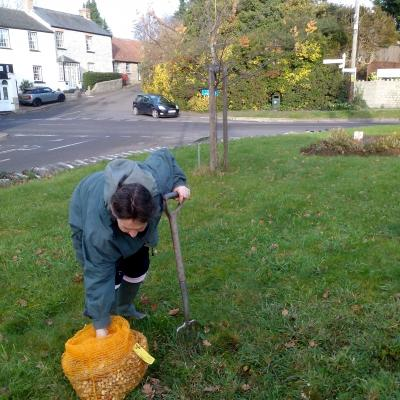 Madeleine planting spring bulbs around the Twinning Tree 2