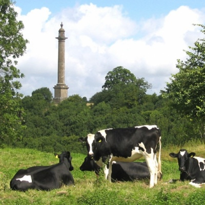 Monument & Cows