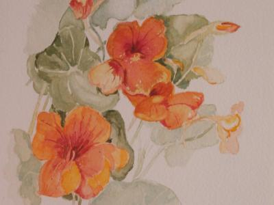 Nasturtiums - Art Group Oct 2017