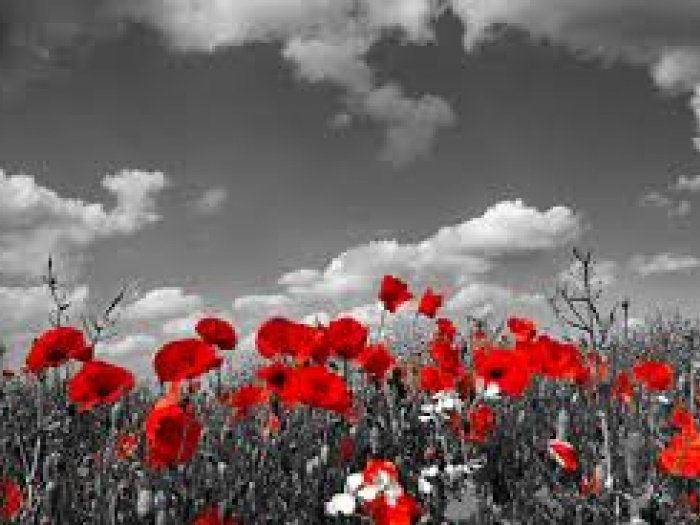 Remembrance Day1
