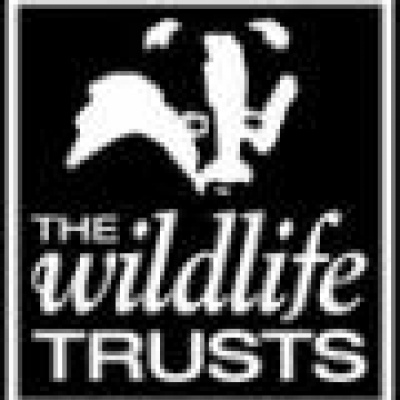 Somerset_Wildlife_Trust_logo