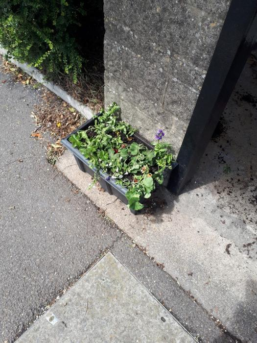 Vandalised Planter Townsend Sun 16th June 2019 after----